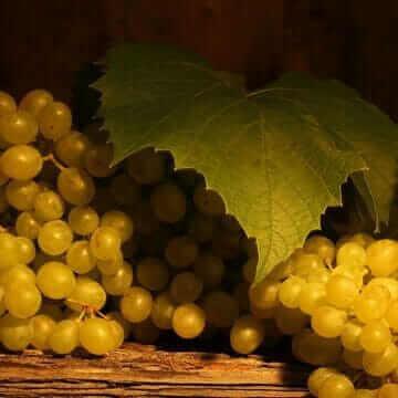 Грозди белого винограда